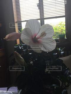 ウィンドウの上に座って花の花瓶の写真・画像素材[1309046]