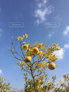家になる果実の写真・画像素材[1750717]