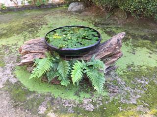 クローズ アップ庭園の鉢の写真・画像素材[1768520]