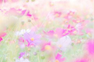 お花畑の写真・画像素材[216103]