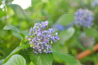 近くの緑の植物をの写真・画像素材[1280645]