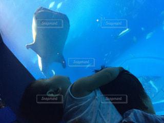 ジンベイザメを見上げるの写真・画像素材[1284365]