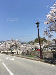 青空と桜の写真・画像素材[1284736]