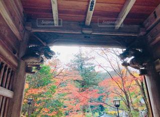 大窪寺にての写真・画像素材[1633552]