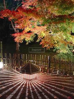 京都・宝厳院ライトアップ♪の写真・画像素材[1764239]