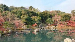 曹源池庭園♪の写真・画像素材[1769511]