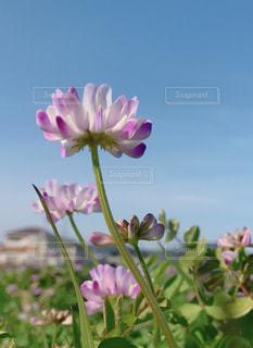 春が来た♪の写真・画像素材[1826666]
