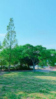 緑豊かな公園♪の写真・画像素材[2168790]