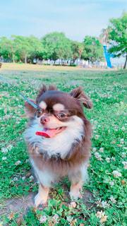 公園にて散歩♪の写真・画像素材[2168863]