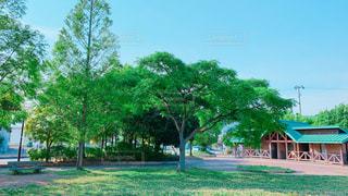 公園にて♪の写真・画像素材[2168869]
