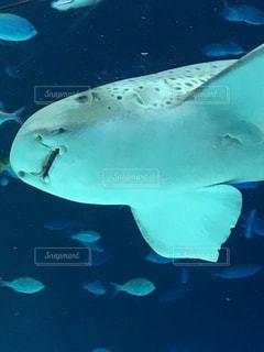 水面下を泳ぐ魚たちの写真・画像素材[1281530]