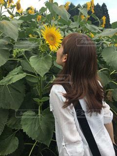 黄色の花の人の写真・画像素材[1282624]