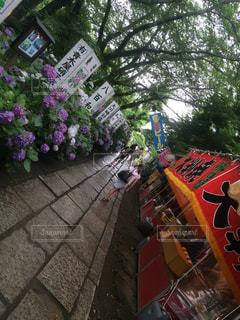 紫陽花祭りの写真・画像素材[1282631]