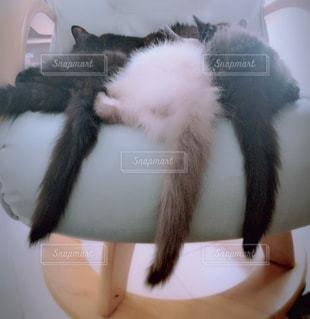 シンクの横で眠っている猫の写真・画像素材[1284140]