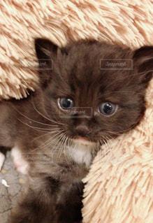 その口を開いて猫の写真・画像素材[1309925]