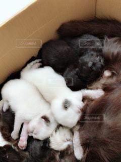 近くに眠っている猫のアップの写真・画像素材[1522183]