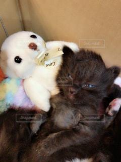猫の隣に座っているぬいぐるみの動物のグループの写真・画像素材[1522186]