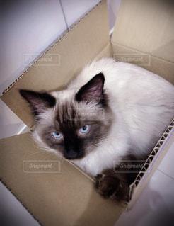 猫の写真・画像素材[2056911]