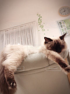 猫の写真・画像素材[2056912]