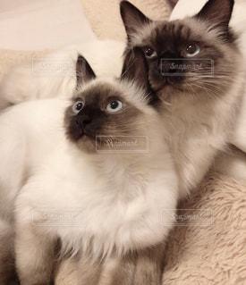 猫の写真・画像素材[2056913]