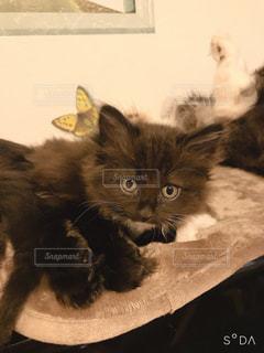 ベッドに横たわる猫の写真・画像素材[2894705]