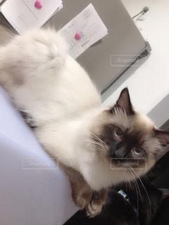 ベッドに横たわる猫の写真・画像素材[2894711]