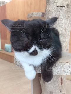 木のテーブルの上に座っている猫の写真・画像素材[2894716]