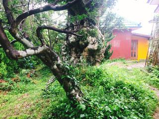 頑張る木の写真・画像素材[1284799]