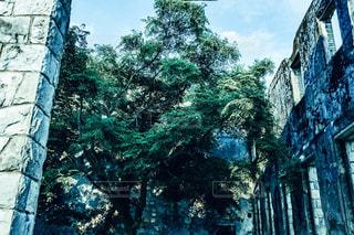 れんが造りの建物の前に木の写真・画像素材[1283837]