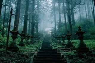 森の横に立っている人の写真・画像素材[1283843]