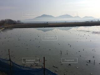 八浜町のレンコン畑の写真・画像素材[1287365]