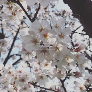 春一番の写真・画像素材[1283705]