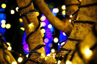 光る街路樹と、輝く光星の写真・画像素材[1283939]