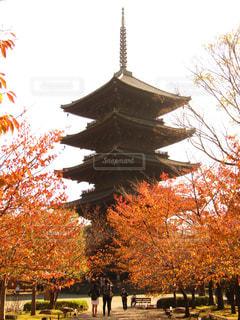 五重塔に紅葉をの写真・画像素材[1284800]
