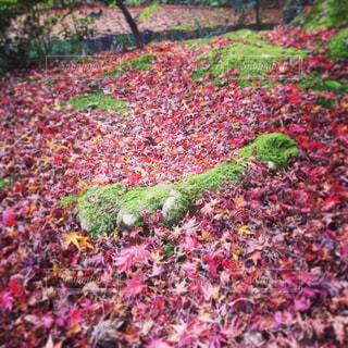 近くの緑豊かな緑の森の写真・画像素材[1283959]