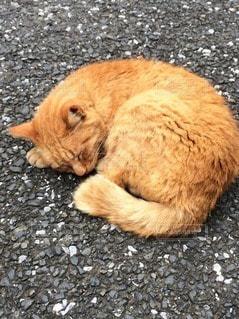 猫の写真・画像素材[46155]