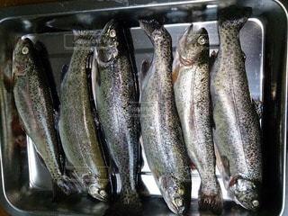 魚の写真・画像素材[47947]