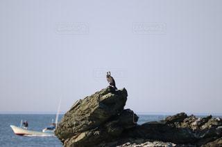 水の体の横にある岩の上に座っている鳥の写真・画像素材[1284434]