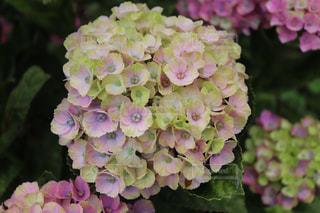 近くの花のアップの写真・画像素材[1284477]