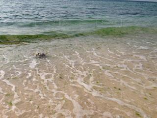 さしみこんにゃく洋の写真・画像素材[1289004]