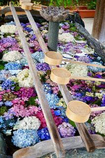 早朝のお寺で綺麗な花手水の写真・画像素材[2237614]