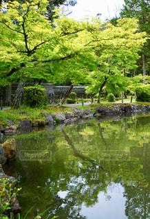 虎渓山永保寺の春の写真・画像素材[2301203]