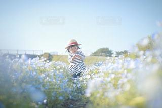 ネモフィラ畑で。の写真・画像素材[1286091]