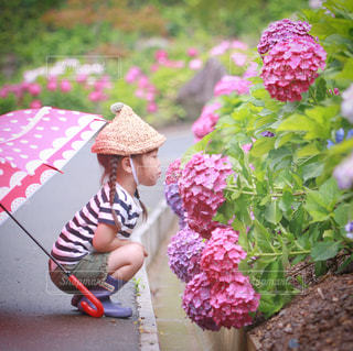 紫陽花にチュ。の写真・画像素材[1286094]
