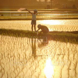 夕日に染まる田園の写真・画像素材[1286095]