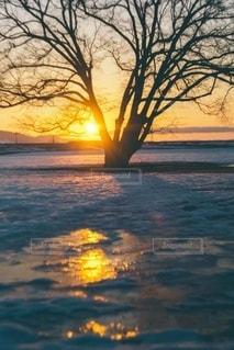 ハルニレの木と朝焼けの写真・画像素材[3333360]