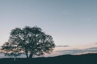 ハルニレの木とマジックアワーの写真・画像素材[3333361]