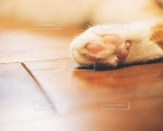 猫の肉球の写真・画像素材[3333580]