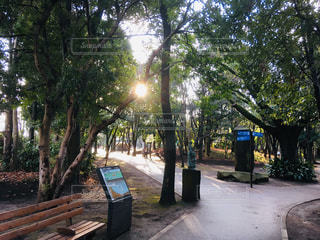 柿田川公園 散策道の写真・画像素材[1763306]