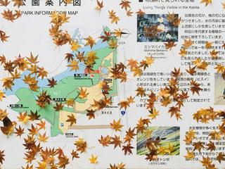 冬の雨らしい景色の写真・画像素材[2806113]